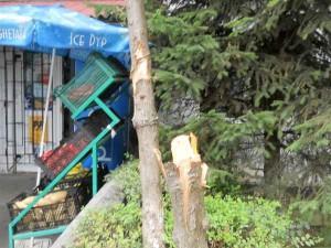 Arborii totemici tăiaţi şi încrestaţi de tânărul drogat, ca o delimitare a teritoriului