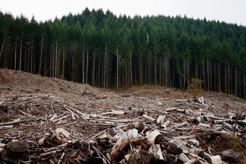 Păduri defrișate